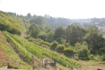 Runkel red vineyard